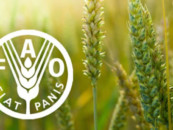 Экологи объединились с ФАО ради продовольственной безопасности