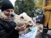 Регионы-участники ЧМ-2018 обяжут обустроить приюты для бездомных животных
