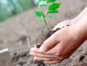 600 000 гектаров лесных угодий было спасено за 3 года