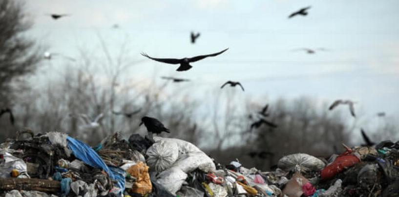 За ушедший год прокуроры обнаружили больше тысячи нелегальных мусорных свалок