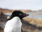 Специалисты установили, что Антарктида по-разному реагирует на глобальное потепление