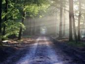 Незаконность ликвидации 8 особо охраняемых природных территорий признана Верховным судом РФ