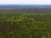 Подготовлен проект карты-схемы территорий, которые  планируют включить в иркутский «зеленый щит»