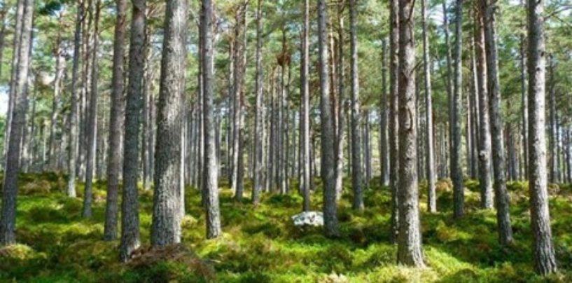 Значение и роль экологии в современном мире