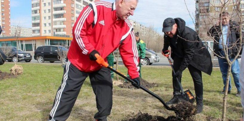 В Челябинске в этом году высадят пять тысяч деревьев