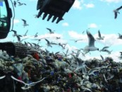 В Подмосковье протестуют против свалок, а в Петербурге – против мусороперерабатывающих предприятий