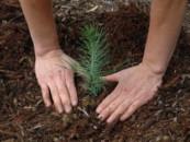 Алтаю вернут леса: за 6 лет восстановят территории, пострадавшие от пожаров