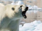 Глобальное потепление – одна из главных причин утраты биологического разнообразия
