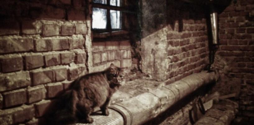 В подвалы новостроек откроют доступ кошкам