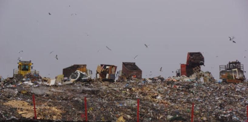 Эксперты начали исследования загрязнения воды и почвы на полигоне «Скоково» под Ярославлем