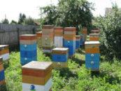 Областной закон «О пчеловодстве» разрабатывается в Псковской области