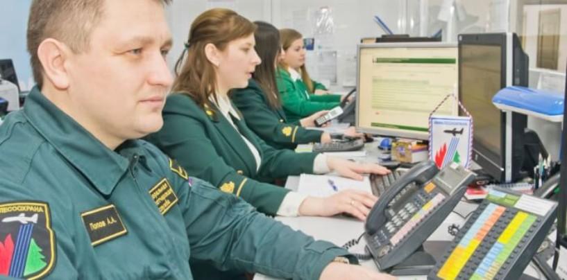 Новгородский областной диспетчерский центр скрывал лесные пожары от МЧС