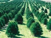 В Саратовской области увеличат площади искусственных лесов