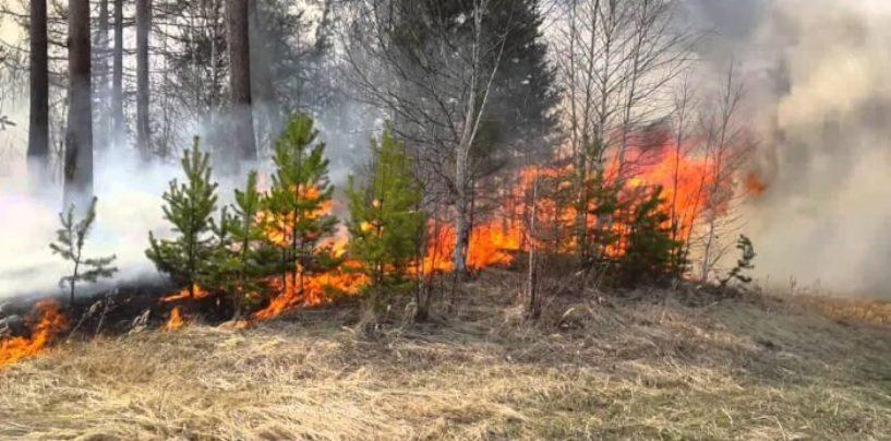 Во избежание возникновения пожаров в волгоградских лесах вводятся ограничения