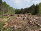 «Черные списки» наносящих вред экологии людей иорганизаций могут появиться вРоссии