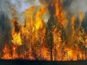 Минприроды пообещало избавить москвичей от ядовитого смога от лесных пожаров