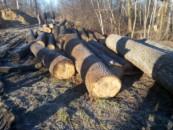 Жители Одинцовского района обеспокоены вырубкой Раздоровского леса