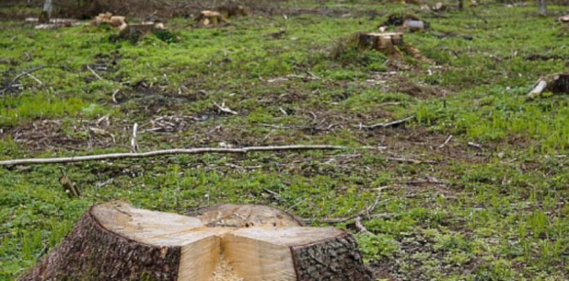 Жители Бурятии протестуют против сдачи леса в аренду китайцам