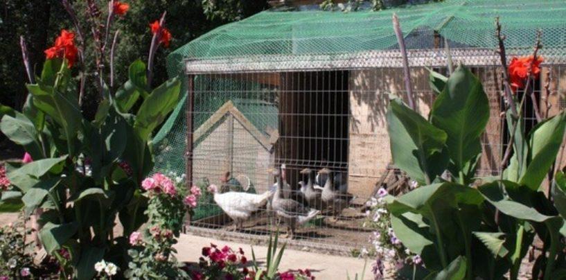 Волгоградцам предлагают отдохнуть от города и уехать на ферму