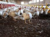 В Башкирии птицефабрику оштрафовали за нанесение вреда экологии