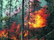 В Балашовском лесничестве туристы спалили гектар леса