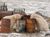Экология Арктики. Госдуме предложили усовершенствовать закон обохране окружающей среды