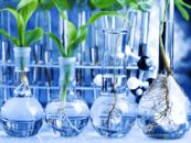 Биоэкономика. Россия и Финляндия — за экологию и бережное отношение к ресурсам