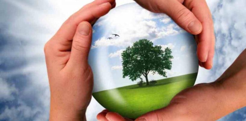 Минприроды России разработает национальный проект «Экология»