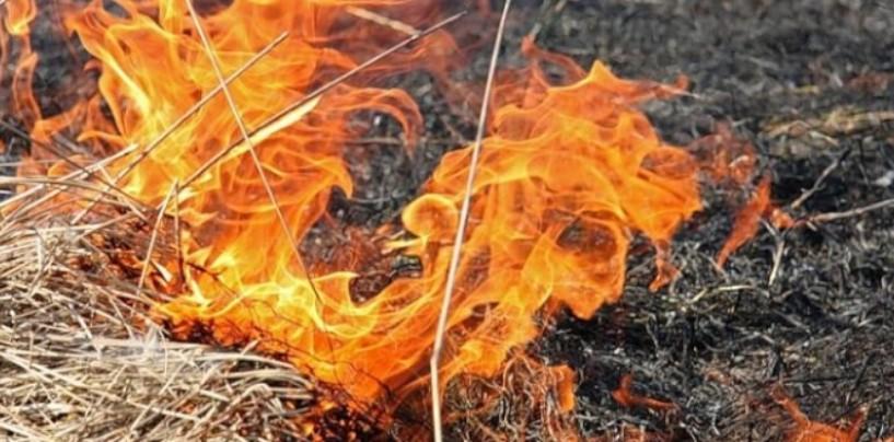 Привлекают к ответственности за выжигание сухой травы