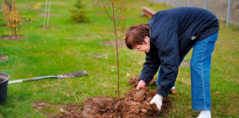 Как посадить дерево, не вставая с дивана