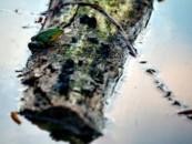 Британские ученые изучат изменения климата за последние 200 лет по сибирским болотам