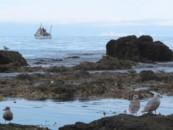 Приморские экологи отметили День действий против рыбной ловли