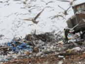 Найдут пути отходов