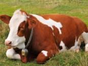 Микробы на пробу: корма из микробов сократят пашню, заменят бобы и улучшат экологию
