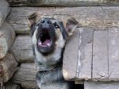 Живодёров стали чаще привлекать к ответственности