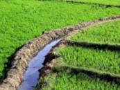 Борьба за экологию может привести к росту цен на продукты