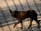 Госдума рассмотрит проект о стерилизации и отлове безнадзорных животных