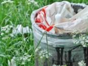 Микроорганизмы почвы смогли переработать пластик