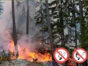 Более 200 гектаров леса горит в Мурманской области