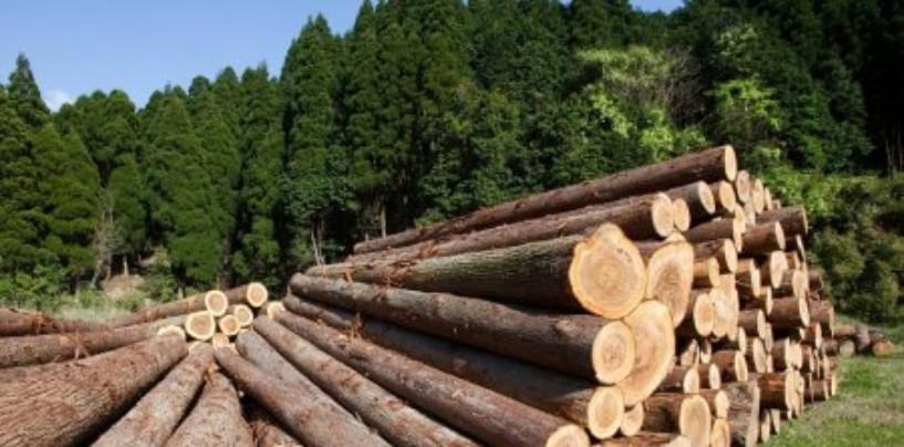 Китайцам отдали 2 млн. га. леса в аренду на 49 лет в Томской области