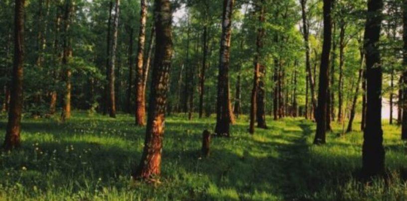 Минприроды РФ планирует реализовать проект полного восстановления лесов