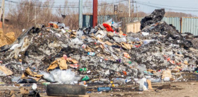 Вышли на след по запаху: жителей Купчино отравляет несанкционированная свалка
