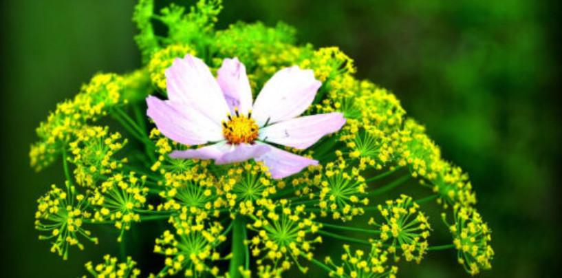 Дети из семи школ Смоленска откажутся от цветов на 1 сентября
