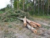В Госдуме рассказали, как повысить эффективность использования леса