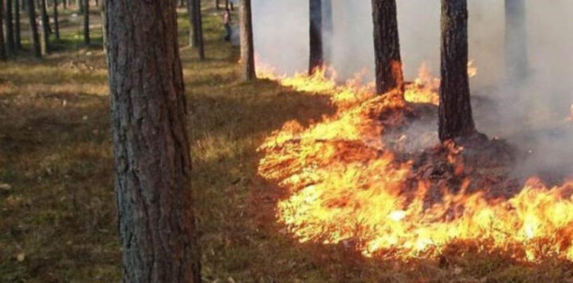 В Энгельсском районе сгорел лес на площади 60 тысяч квадратных метров