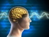 Что нужно делать, чтобы мозг не старел