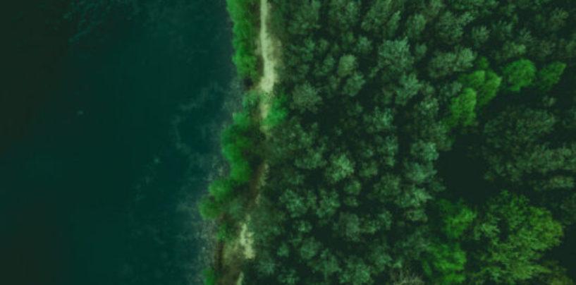 За последние 35 лет общая площадь лесов на планете увеличилась на 7%