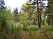 «Желтые елки, братан!» Руслан Белый пожаловался на Челябинск в интервью Дудю