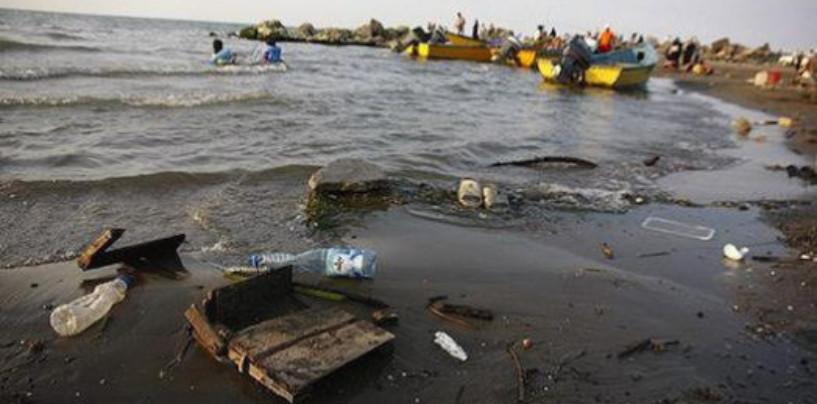 Агропромышленный комплекс загрязняет Балтийское море