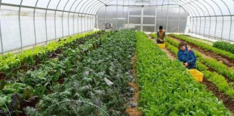 Будет сформирован Реестр физических и юридических лиц, производящих органическую продукцию